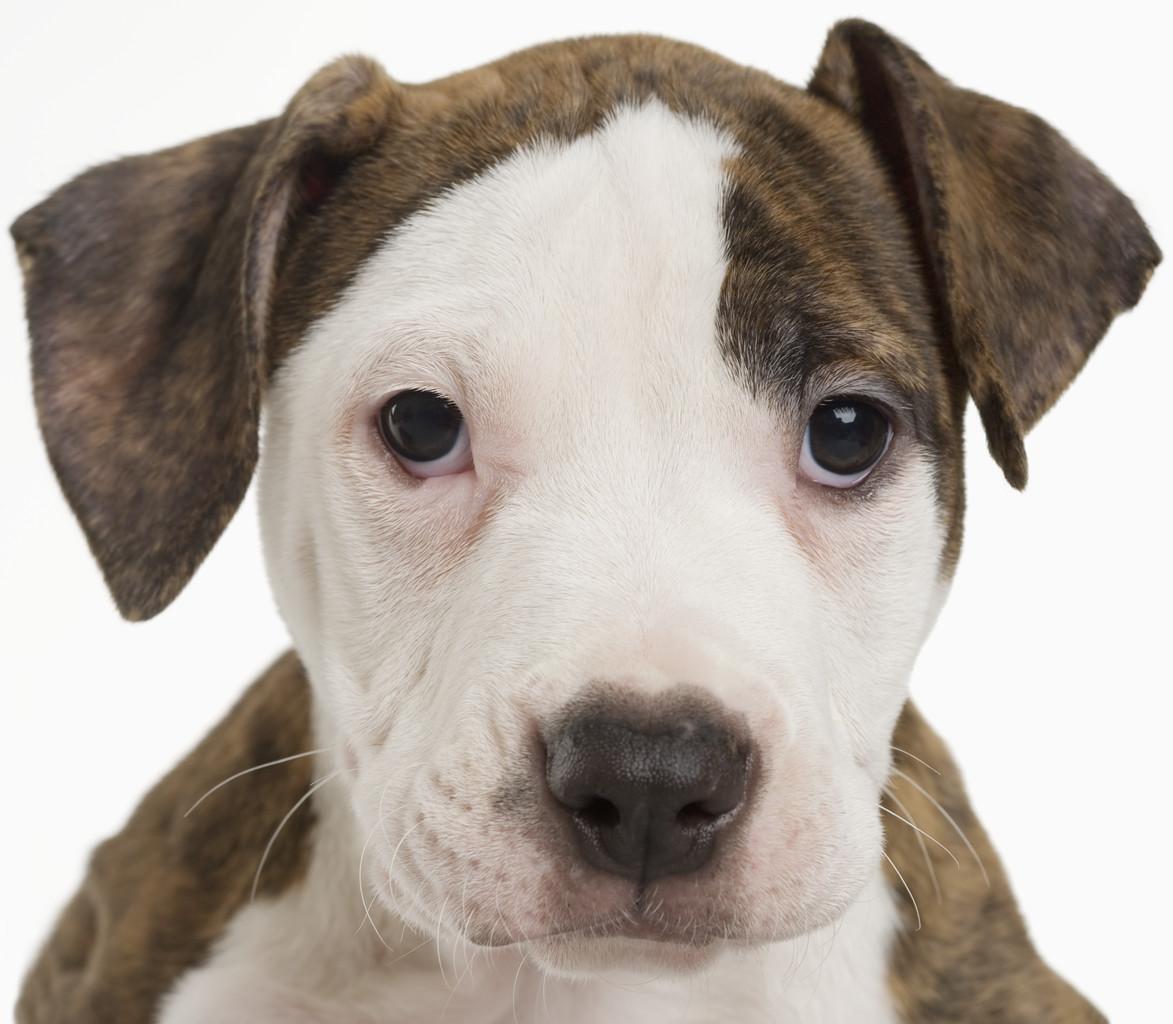 Dieta sana e fresca per il cucciolo di cane e gatto  Centro Omeopatico Veter...