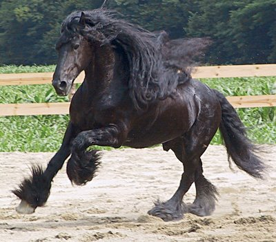 Cavallo agricolo italiano 47