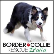 logo_bordercollieruscue