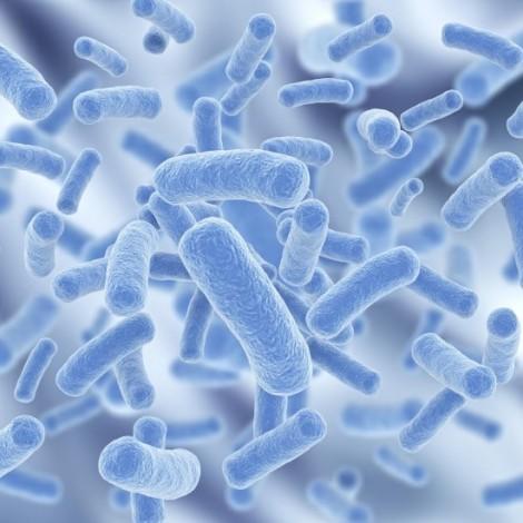 microbiome_original-550x550