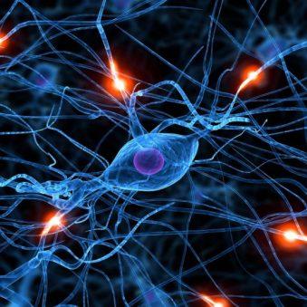 neuroni-550x550