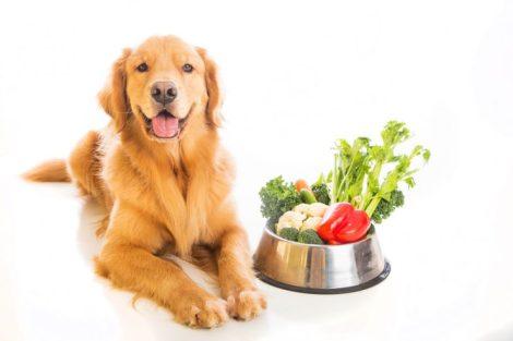 cibo-vegano-per-cani-cane-vegetariano